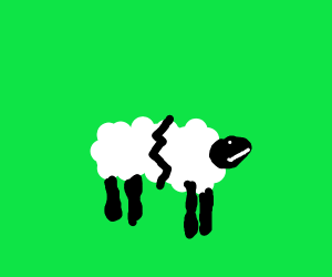 fractured sheep