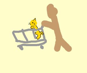 Walking a cat in a trolley