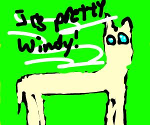 Llama Weatherman