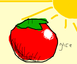 A tomato on a sunny day