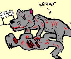 Wolf contest