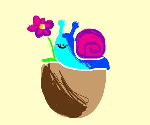 Snail on a brown flower pot