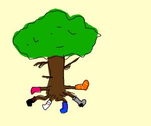 Tree wearing an assortment of socks