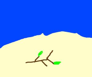 Stick on a beach