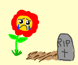 sentient flower at a funeral