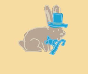A dapper rabbit