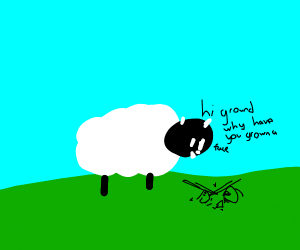 Sheep smiles at the ground