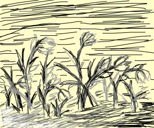 gray dead plants