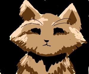 cat (amazing)