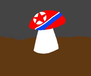 North Korea mushrooms (actual mushrooms)