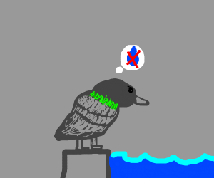 Pigeon hates water
