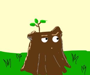 Curious tree stump