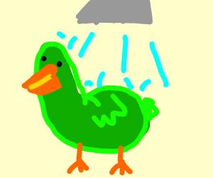 duck showering