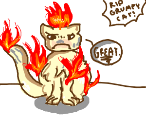 A cat burning on fire