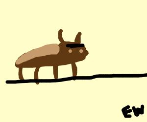 cok-roach