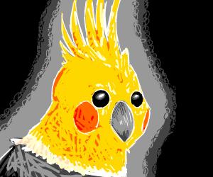 Cockatiel (bird)