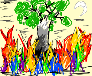 tree on multi-colored-fire