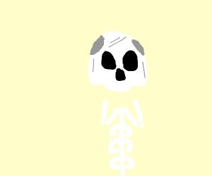 Skull minus jaw