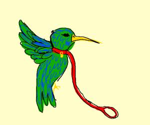Hummingbird on a leash