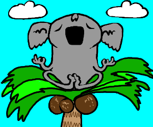 Koala meditating on a coconut palm tree thing