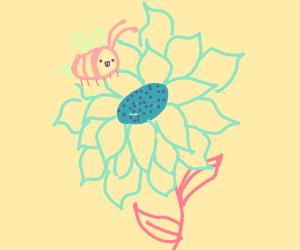 Bee pollinates sunflower