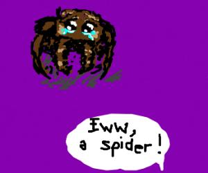 Eww a spider