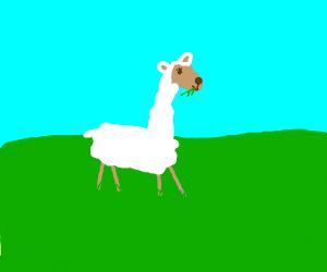 long neck sheep