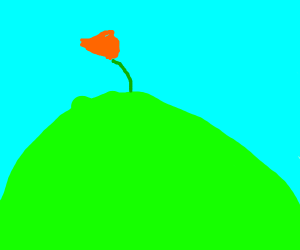 a poppy flower on a hill