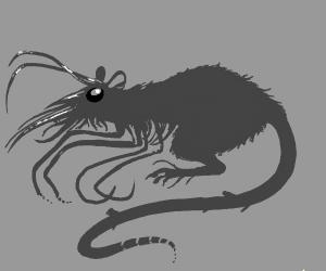 rat / krill?