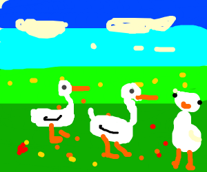 Geese on a meadow (they might be chickens)