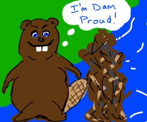 A beaver is proud of the dam he built