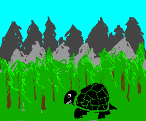 Tortoise in the forest
