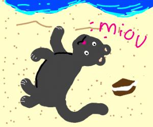 Cat on the beach next to an oreo