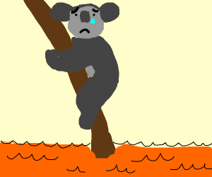 Sad koala in orange creamy of whatever