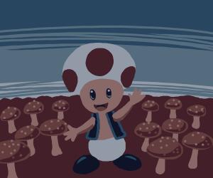 Toad in a mushroom field