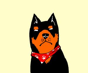 Chino doggo