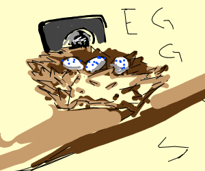 Camera placed on bird nest pointed at E G G S