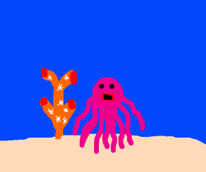 Octopus lives by coral