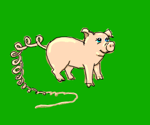 A pig with a really long curly tail