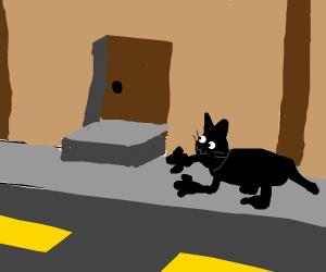 Human-Cat walking down a street