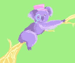 Fancy Koala