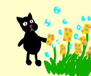 Cat harvesting a Sponge