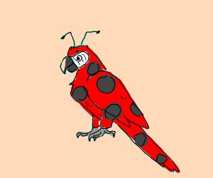 ladybug-parrot hybrid