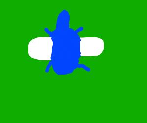 The big Blue dragon fly