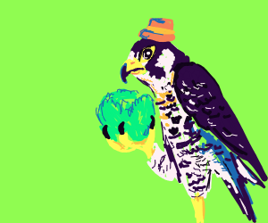 Falcon man looks at cabbage