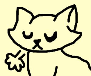 mildly upset cat