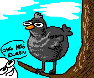 glamourous bird