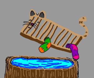 washboard cat