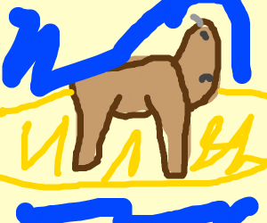 Bison on an Island