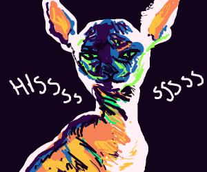 Hissing sphynx cat